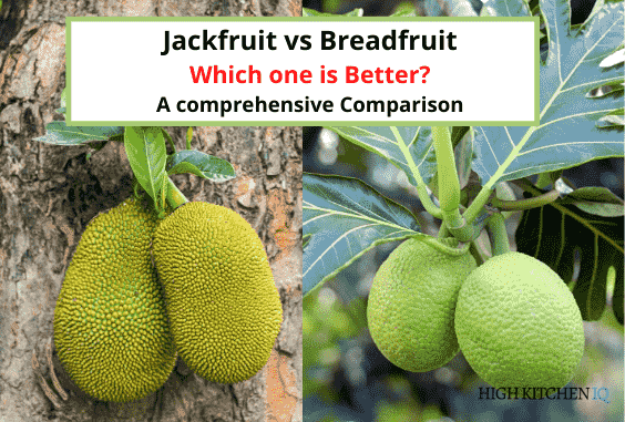 Jackfruit vs Breadfruit – Which One is Healthier For You